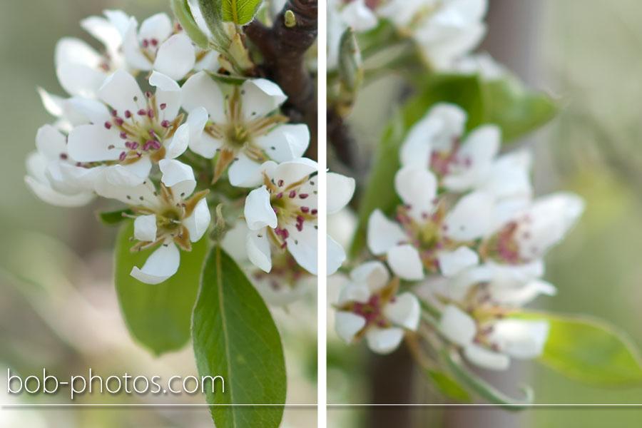bruidsfotografie stavenisse corne en judith 014