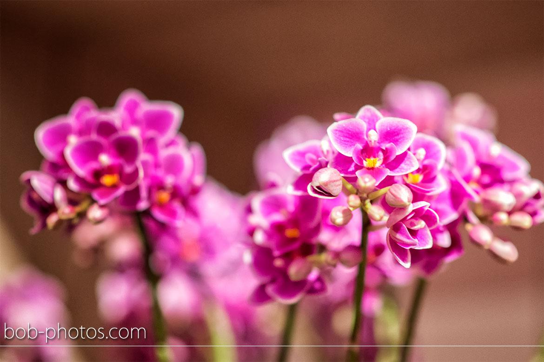 Bloemenstal Halsteren 12