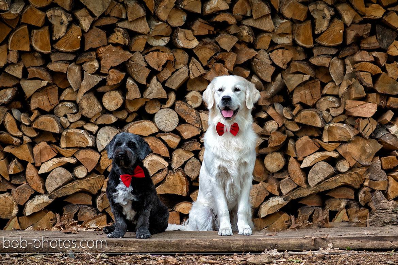 Honden op de Bruiloft Bruidsfotografie Schijf