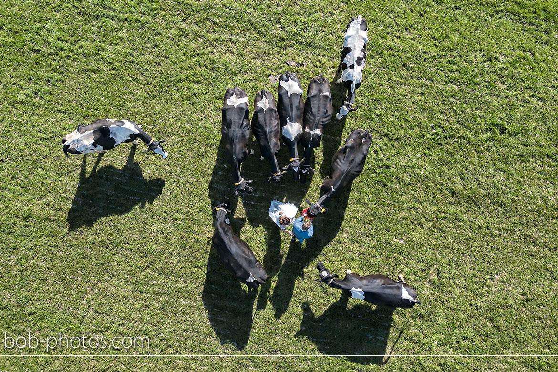 Koeien Schaik kaasboerderij
